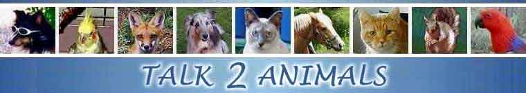 Talk 2 Animals header